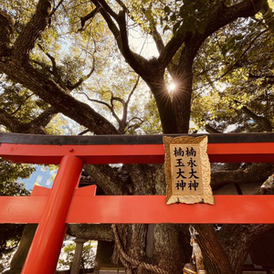 Visiting a park temple in Osaka. #summer #park #temple #torii